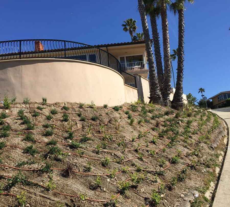 New retaining wall creating more flat area for a pool deck while simultaneously creating an open view for the owner. New plants with a drop system was installed. Pacificland Constructors