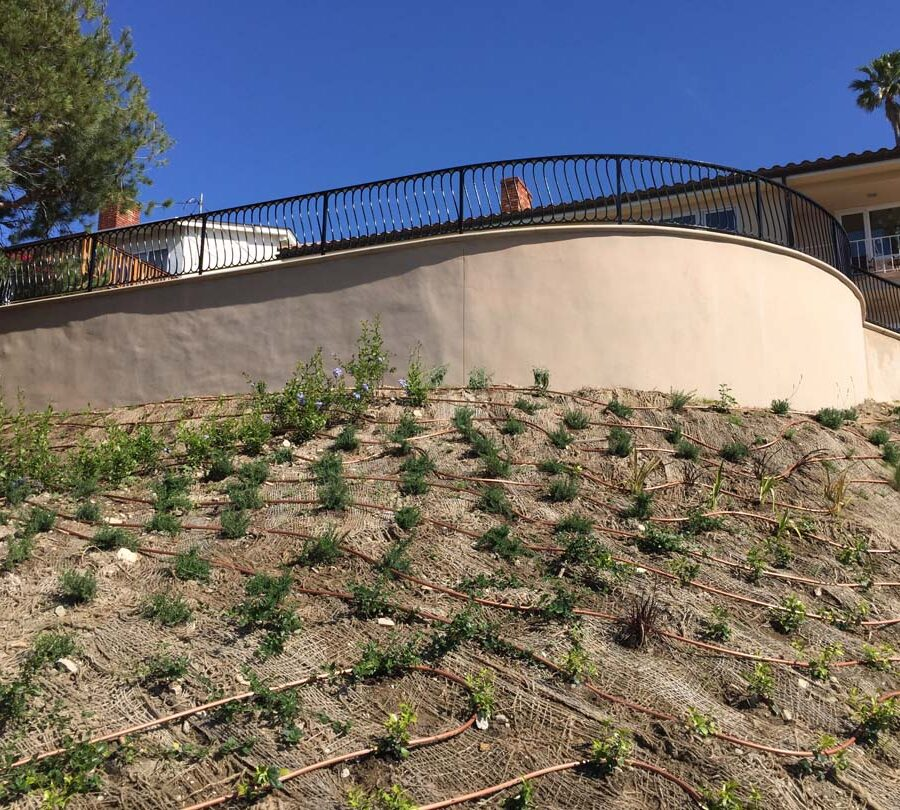 New Retaining wall with drop irrigation now has native vegetation growing on the ground. Pacificland Constructors